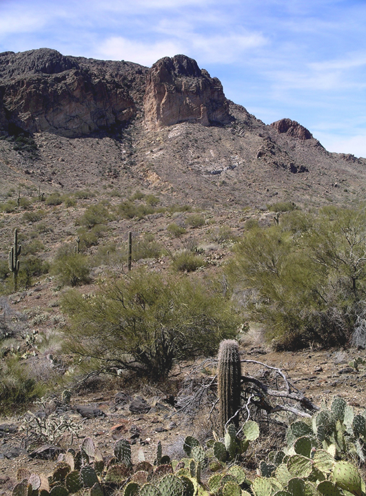 Short round cacti dominate the foreground, while a red cliff rises against a blue grey sky in the back.